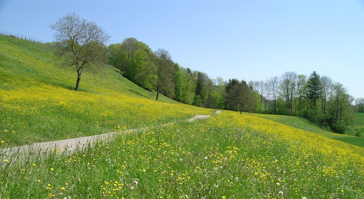 Spring meadow scenery wallpaper kindred media for The meado